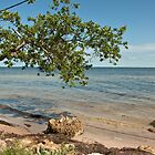 Tropical Paradise  by John  Kapusta