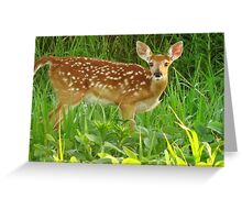White-tailed Fawn Greeting Card