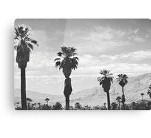 Desert Palms (Palm Springs) Canvas Print