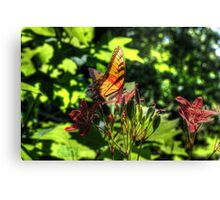 Monarch Butterfly at Blue Springs HDR by LarcenIII Canvas Print