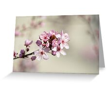 Cherry Blossom Flowers Greeting Card
