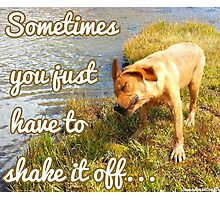 Shake it off red lab Photographic Print