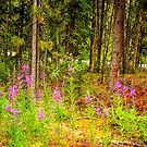 Fireweed in the woods by Yukondick