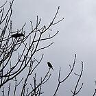Bradfordville Birds by candysfamily