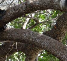 Colobus Monkeys sitting in a tree Sticker