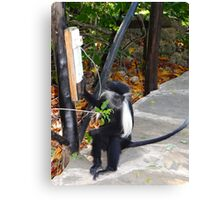 Electrical work - monkey power Canvas Print