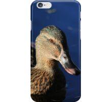 Female mallard on Llangollen Canal iPhone Case/Skin
