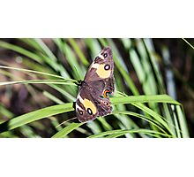 Butterfly Companion Photographic Print
