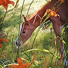 """""""Cash, The 2 Day Old Orphan Colt"""" by Melinda Stewart Page"""