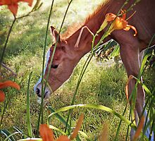 """Cash, The 2 Day Old Orphan Colt"" by Melinda Stewart Page"
