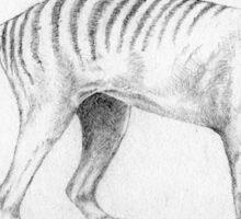 Tasmanian Tiger (believed to be extinct) Sticker