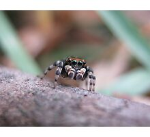 Once Upon a Jumping Spider Photographic Print