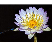 Dragonfly Lily Photographic Print