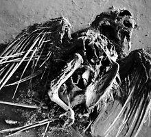 20.6.2014: Dead Bird IV by Petri Volanen