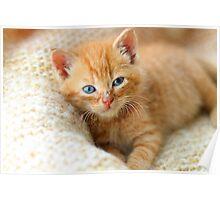 Kitten on blanket Poster