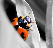 Little Red Lady Bug by Kelly Walker