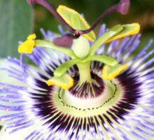 Passionfruit Flower Sticker