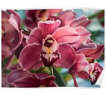My Orchids 3 Poster