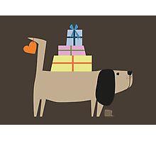 Geschenkehund  Photographic Print