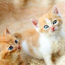 Curious kittens by GreyFeatherPhot