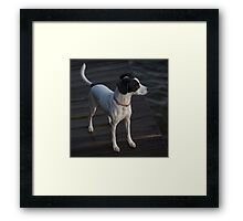 My dog Leica Framed Print