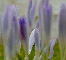 Spring Flowers on the Isle of Arran Scotland by Aaron McKenzie