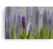 Spring Flowers on the Isle of Arran Scotland Canvas Print