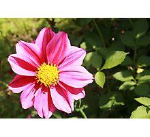 Pink Flower in a Garden Photographic Print