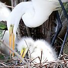 mom and baby egret by Dennis Cheeseman
