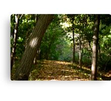 A walk through the forest  Canvas Print