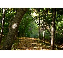 A walk through the forest  Photographic Print