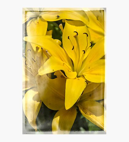 Summer Lilies Photographic Print