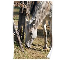 Horse Grazing by a Fence Poster
