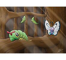 Metamorphosis - Caterpie > Metapod > Butterfree  Photographic Print