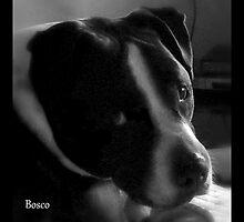 Bosco by Lydia Marano