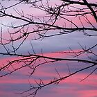 December Sunset by Phoebetales