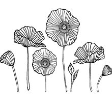 Poppies by Stacey Roman