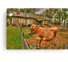 What a cow of a shot ! Canvas Print