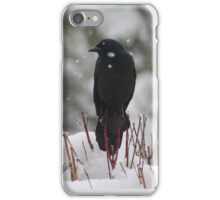 grackle in the snow iPhone Case/Skin