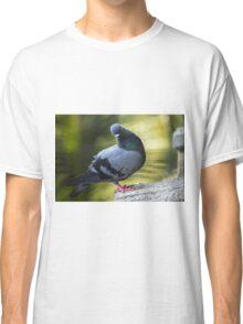 Beautiful pigeon in focus Classic T-Shirt
