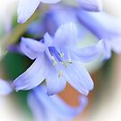 Bluebell by shalisa