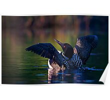 Rise 'n shine - Common loon Poster