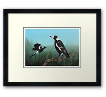 Australian Magpies Framed Print