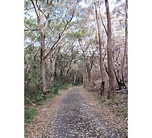 Easy walking track to Sugarloaf Point & Lighthouse. N.S.W. Nth. Coast. Photographic Print