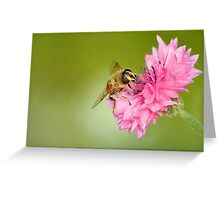 Hoverfly on Cornflower Greeting Card