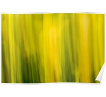 Abstract Daffodils Poster