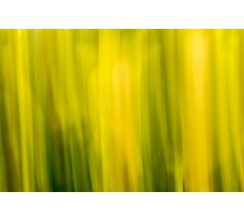 Abstract Daffodils Photographic Print