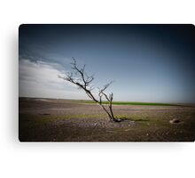 A dried up dead tree Negev desert, Israel.  Canvas Print