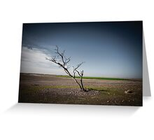 A dried up dead tree Negev desert, Israel.  Greeting Card