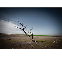 A dried up dead tree Negev desert, Israel.  Photographic Print